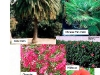 thumbs_typical-plants_2